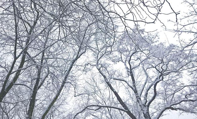 Winter Wonderland Februar 2015 Fräulein Wirbelwind